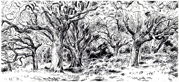 Tree Drawing 1986